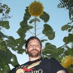 Ken McKim standing in front of an 8-foot sunflower